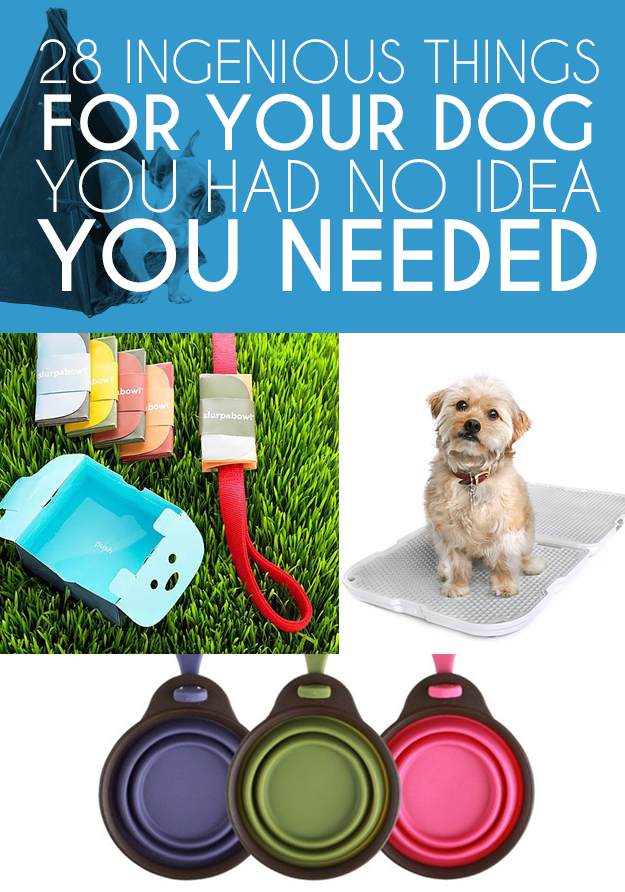 stuff dogs need