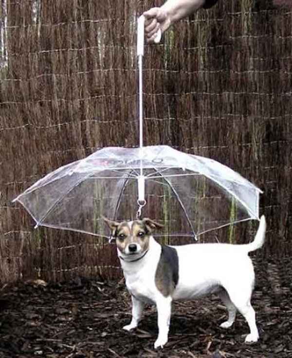"The pet umbrella keeps your dog ""dry and comfortable."""