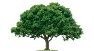 A tree is the opposite of your lungs. Physically and functionally.