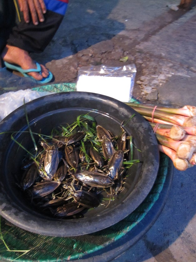 10 Crazy Things You Can Eat In Thailand