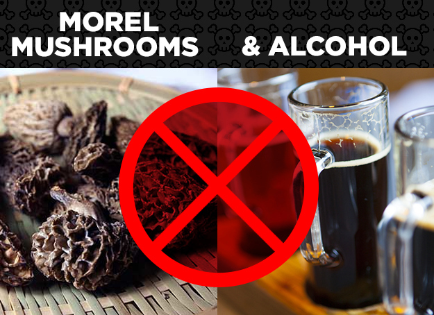 Morel Mushrooms + Alcohol = Morel Poisoning