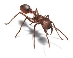 If you put all the earth's ants in one pile, and all the earth's humans in another pile, the pile made of ants would be bigger (have more mass).