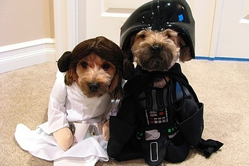 & 9 Simple Couples Costumes For You And Your Pet