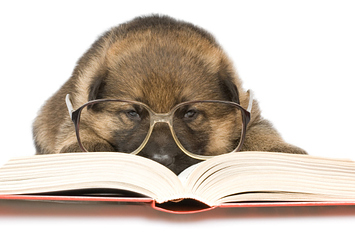 11 animals with insanely predictable reading preferences