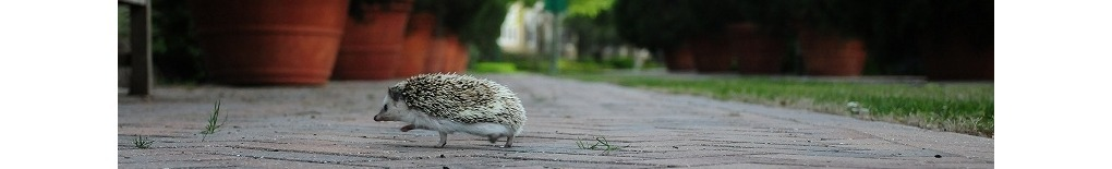 brillothehedgie