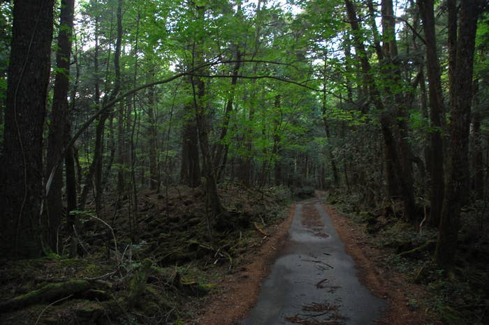 Located at the base of Mt Fuji, this creepy forest is scattered with dead bodies, and so dense it is dark even at high noon. Aokigahara Forest has been a popular place for suicides since the 1950s, with claims that over 500 people have taken their life here.