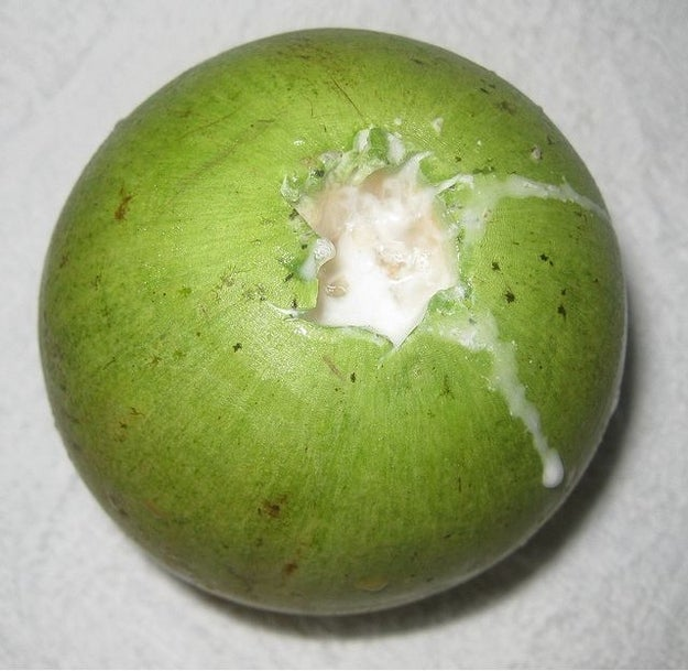 Star Apple Fruit Jamaica