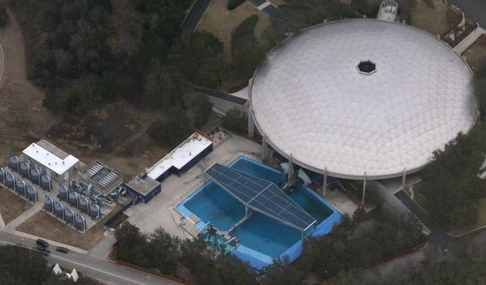 From this overhead view of SeaWorld San Antonio, orcas are visible. They're located near the middle of outdoor pool.