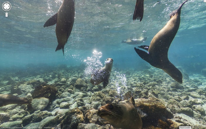 Last month, Google launched its Street View of the Galapagos Islands. Meet sea lions underwater or visit the Charles Darwin Foundation.