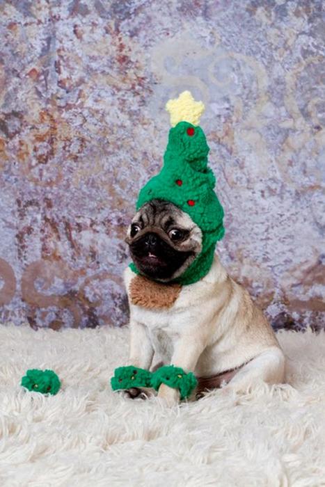The 12 Pugs Of Christmas