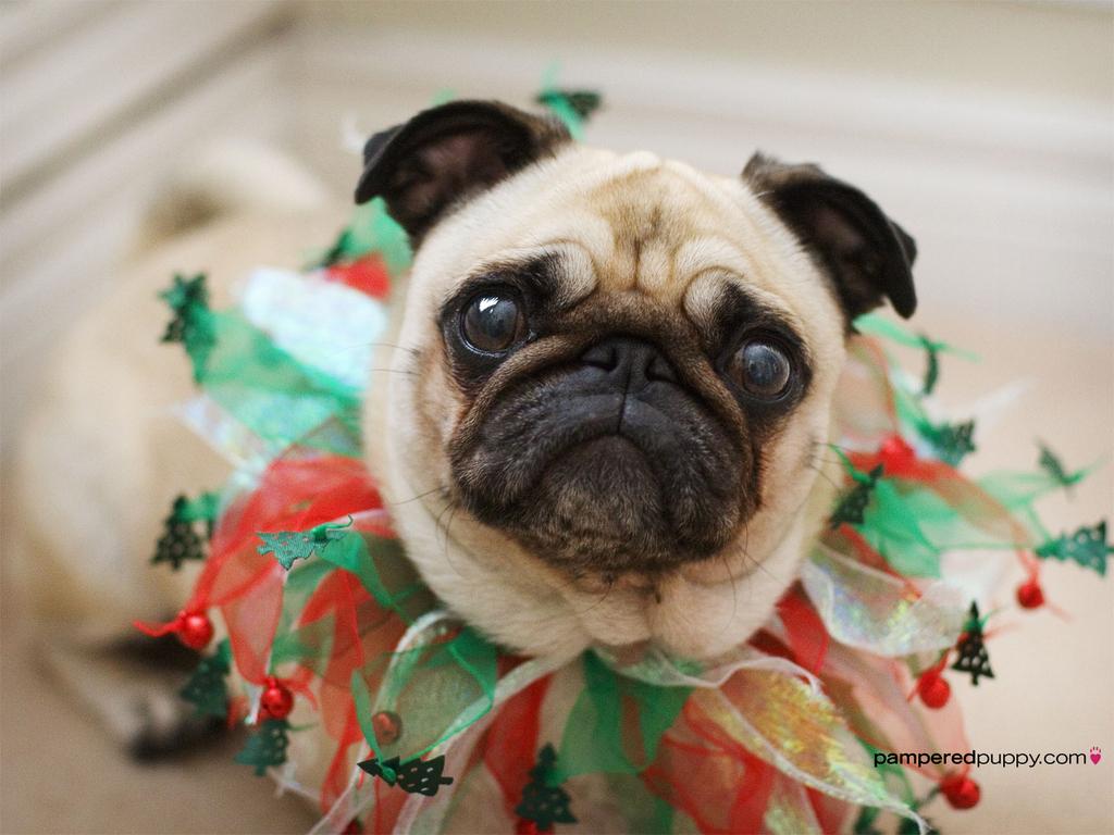 Pug Christmas Tree Topper   Home Design Inspirations