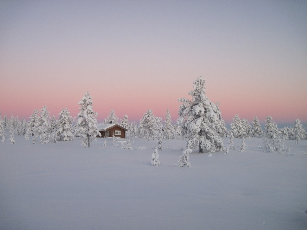 The Norwegian Boreal Forest