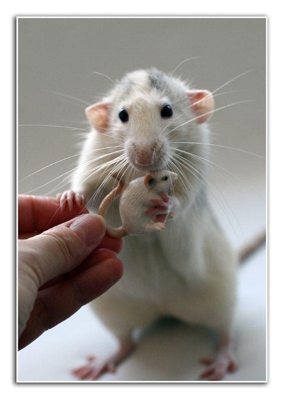К чему снятся домашние мышки
