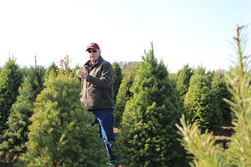 From Helicopter To Home Depot: The Journey Of More Than 10 Million Christmas Trees