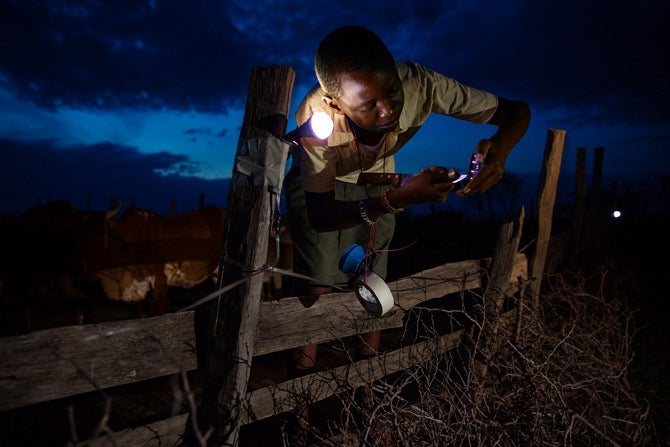 Kenyan teen Richard Turere created a lion deterrent system using broken flashlight and motorcycle parts to protect his father's herd of cows. The device also helps to save the endangered lions by preventing fatal conflict with humans.
