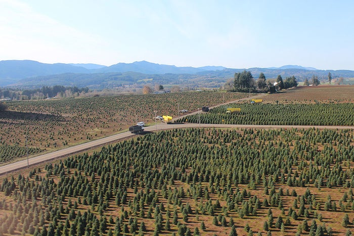 The Christmas tree farm from the helicopter.