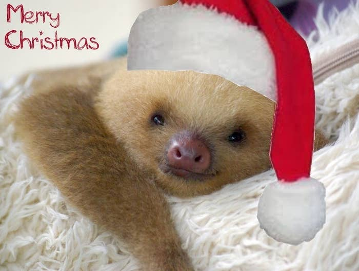 This sleepy-head rolling over to wish you a Merry Christmas stirs up the yuletide cheer in just about everyone.