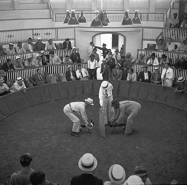 Here is a Puerto Rican cockfight from 1937.