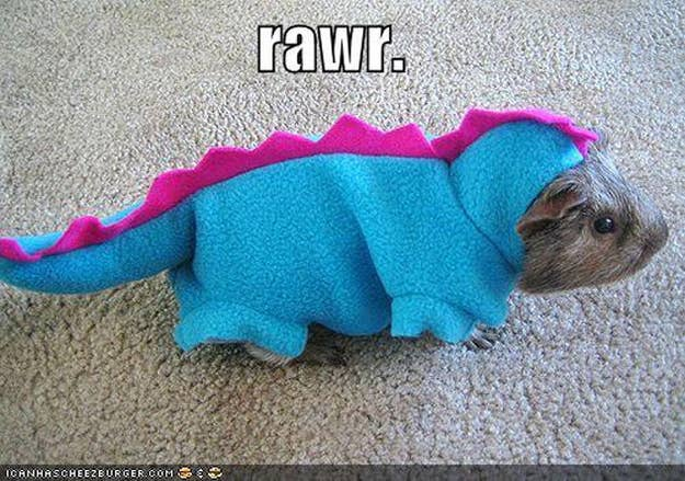 What Guinea Pig? That's a dinosaur bro.