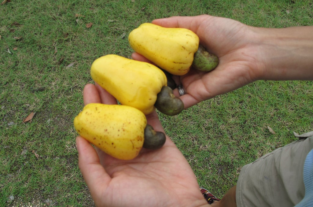 28 Fruits And Vegetables That You Had No Idea Grew Like That
