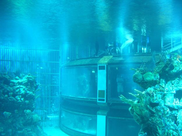 """O aquário em """"Os Mares"""" é tão grande que a esfera """"Espaçonave Terra"""" caberia dentro dele."""