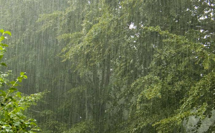 Rain can be beautiful to all the senses. A warm summer rain is pleasurable to feel, see, hear, and smell!