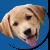 puppybowl