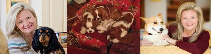 It started with Little Tony, a black-and-tan King Charles Cavalier puppy. Then came Peach, a Blehneim King Charles Cavalier, and soon after, Peach's puppies, Daniel Boone and Kit Carsson. Herding together the entire pack is Lisa's spunky spit-fire of a Corgi named Ruby. So much for writing being a solitary practice, huh?