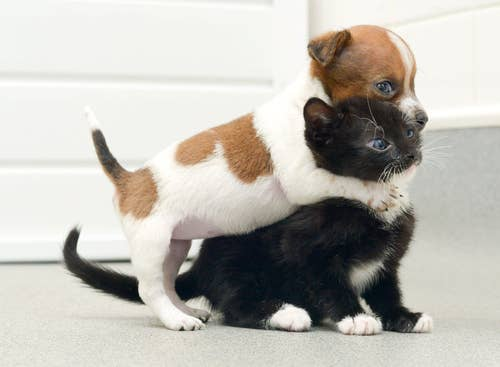 Uniting dog and cat lovers, one hug at a time.