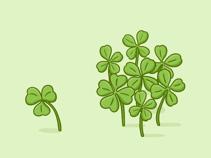 A four-leaf clover is actually a genetic mutation of the three-leaf clover (shamrock) that can be caused by a rare recessive gene or environmental causes. These mutations grow in groups, so if you find one, you're bound to find many more!