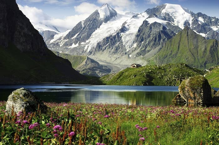 Warming at almost three times the global average, alpine glaciers are steadily being replaced with mountain plants, growing far above where they should be.