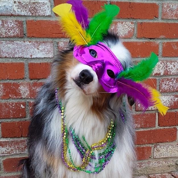 21 Dogs In Their Mardi Gras Finest
