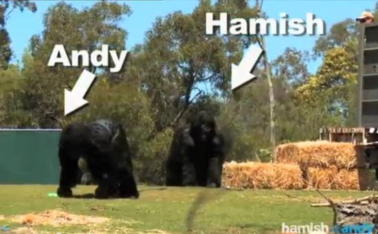 Nothing beats the spectators reactions to the 'gorillas' playing golf and riding a bike. Watch the whole prank here.