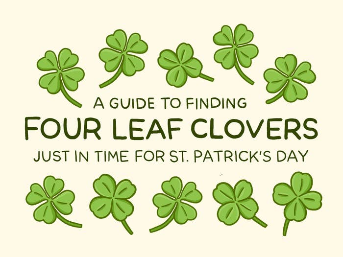 A Guide To Finding Four Leaf Clovers Just In Time For St Patricks Day