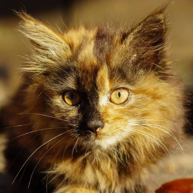 What Kind Of Cat Are You - 29 cats lost way life