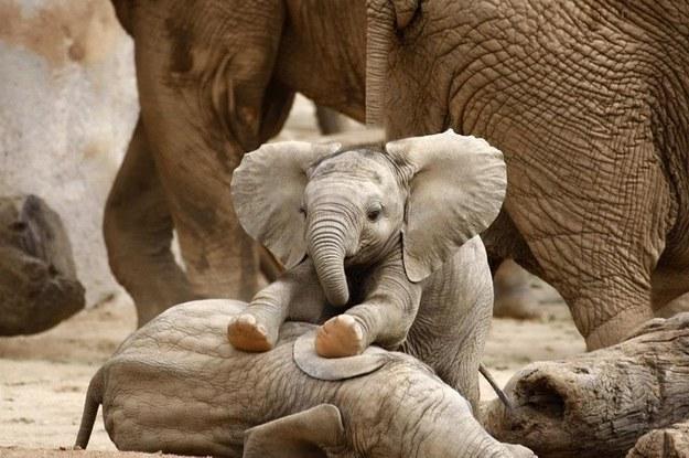 7 Faucet Finishes For Fabulous Bathrooms: 17 Elefantes Bebés Aprenden A Usar Sus Trompas