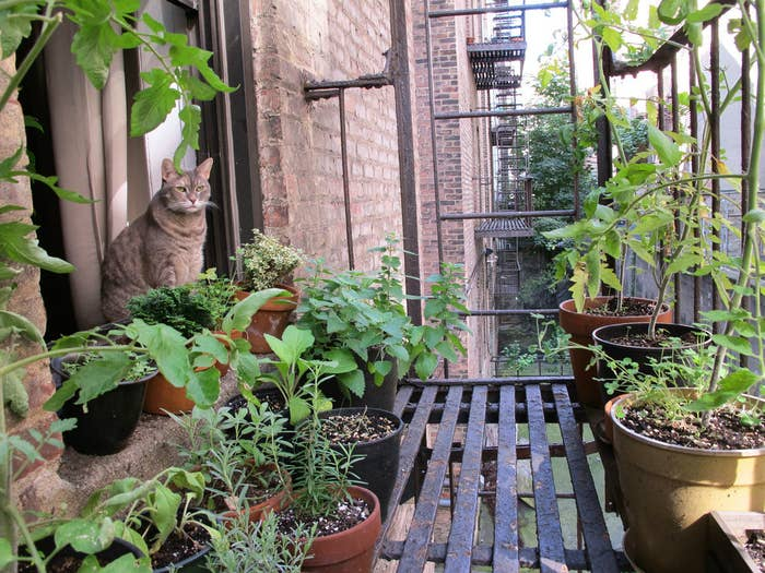 To Be Clear Storing Items On A Fire Escape Is Against Code At