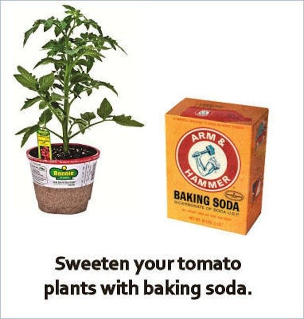 Baking soda can make home-grown tomatoes taste less tart.