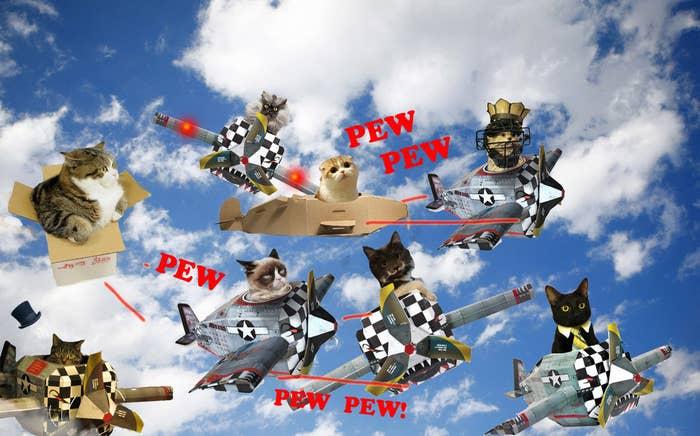 Internet cats shown: Professor Peanut, Maru, Colonel Meow, Grumpy cat, Waffles, Hamilton the Hipster Cat, Dogthecatmandude, and Business Cat