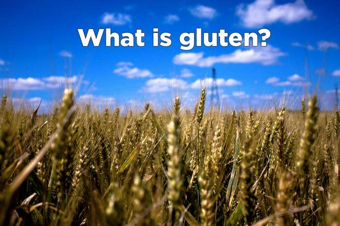 A: Gluten is a protein found in wheat, barley, and rye. It's that thing that helps dough rise, making your bagels chewy and your sandwich bread soft.