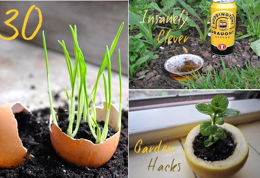 30 Insanely Clever Gardening Tricks