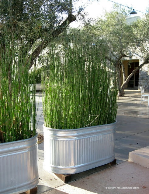 Bonus: If you plant lemongrass, it'll keep the mosquitoes away.
