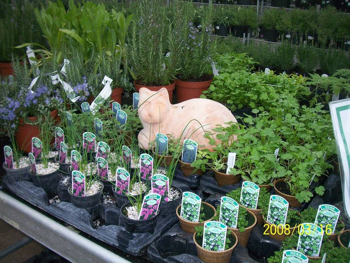 how to start a herb garden. Let A Professional Start Your Seedlings. How To Herb Garden F