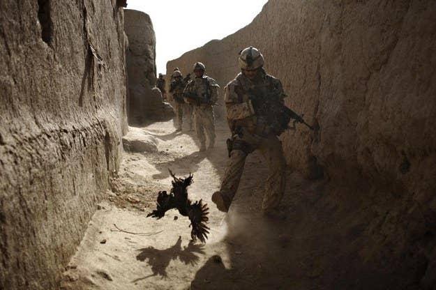 Um soldado canadense persegue uma galinha segundos antes de ele e sua unidade serem atacados por granadas em Salavat, a sudoeste de Kandahar, no Afeganistão.  11 de setembro de 2010.