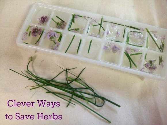 Preserve herbs by freezing them into ice cubes.