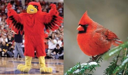 Enhanced on North Carolina Cardinal Bird