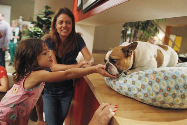Modern family french bulldog episode – Dog life photo