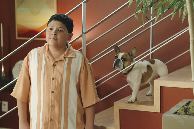 Stella the french bulldog on modern family – Dog life photo