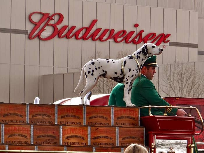 Well, one of its homes, at least. In fact, the Fort Collins Budweiser plant is the home of the famous Budweiser Clydesdales horses.