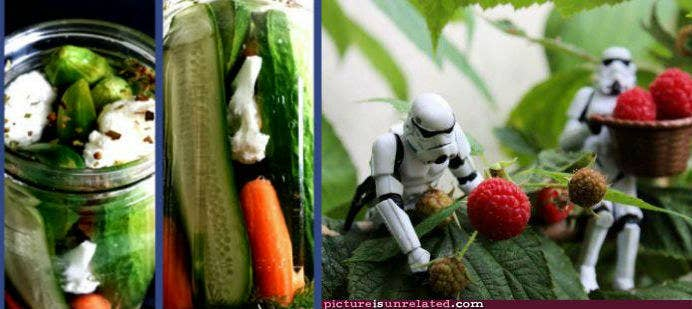 If you squint, these pickled vegetables look exactly like tiny storm troopers gathering berries.